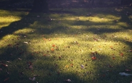 Nature leaves grass plants macro lawn wallpaper