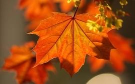 Nature leaves macro 2 wallpaper