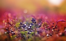 Nature macro berries wallpaper