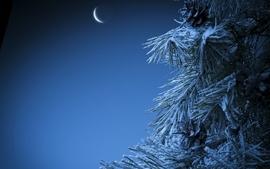 Nature moon pine trees wallpaper