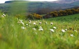 Nature photography grass fields wallpaper