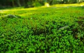 Nature plants macro depth of field wallpaper