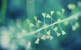 Nature plants macro flora depth of field wallpaper