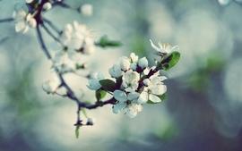 Nature spring season blossoms macro wallpaper
