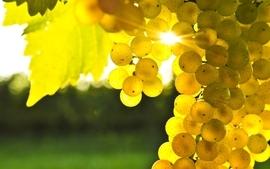 Nature sun fruits grapes sunbeams wallpaper