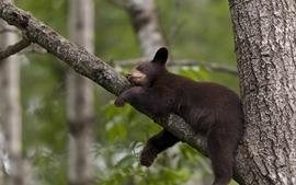 Nature trees animals bears wallpaper