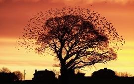 Nature trees autumn birds houses wallpaper