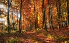 Nature trees autumn forest photography wallpaper