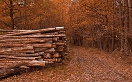 Nature trees autumn leaves path logs wallpaper