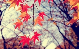 Nature trees autumn leaves wallpaper