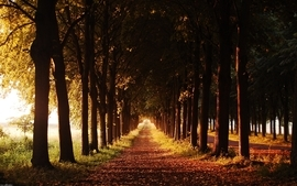 Nature trees autumn roads 2 wallpaper