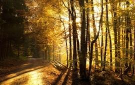 Nature trees autumn season 2 wallpaper