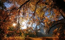 Nature trees autumn season wallpaper