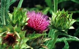 Nature trees flowers thistles wallpaper
