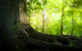Nature trees forest depth of field 2 wallpaper