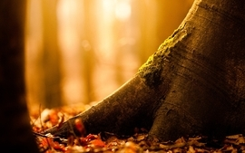 Nature trees forest depth of field wallpaper