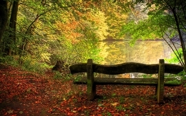 Nature trees forest leaves bench lakes fallen leaves wallpaper