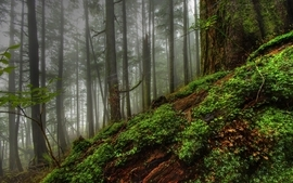 Nature trees forest planets photography fog plants moss hdr wallpaper