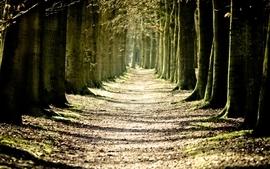 Nature trees roads wallpaper