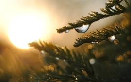 Nature trees sunlight water drops macro dew wallpaper