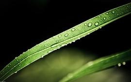 Nature water drops macro 2 wallpaper