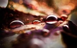 Nature water drops macro wallpaper