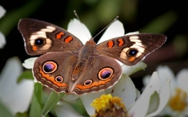 Nature wings flowers insects butterflies wallpaper