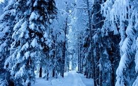 Nature winter season snow trees 2 wallpaper