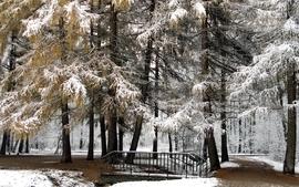 Nature winter season snow trees forest wallpaper
