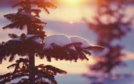 Nature winter season snow trees wallpaper