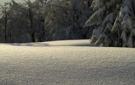 Nature winter snow macro wallpaper