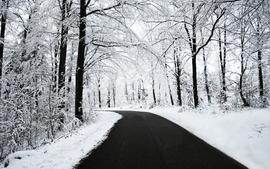 Nature winter snow trees roads wallpaper
