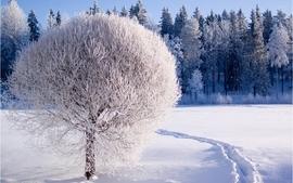 Nature winter trees wallpaper