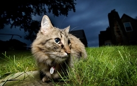 Night cats animals photography grass pets wallpaper