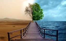Ocean trees desert contrast wallpaper