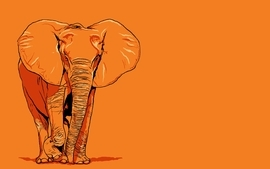 Orangeele pid orangeelephant is for elephant orange elephant wallpaper