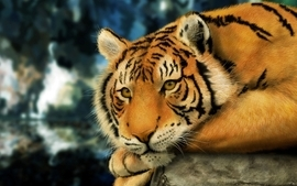 Paintings nature animals digital tigers wallpaper