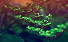 Photography roads bonsai macro depth of field wallpaper