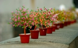 Plants depth of field flowerpot complex magazine potted plant wallpaper