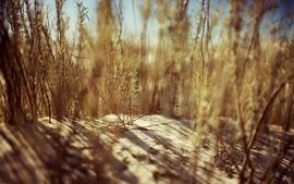 Sand desert grass wallpaper