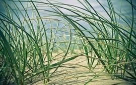 Sand plants wallpaper