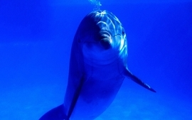 Sea animals dolphins wallpaper