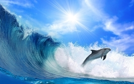Sea waves dolphins wallpaper