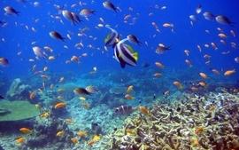Sealife fishes wallpaper