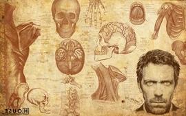 Skulls anatomy dr house hugh laurie tv series wallpaper