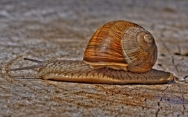 Snails hdr photography wallpaper