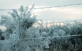 Snow cold deviantart artwork barbed wire wallpaper