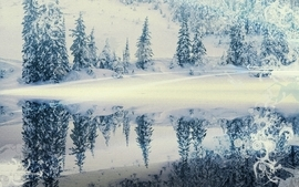 Snow forest 2 wallpaper