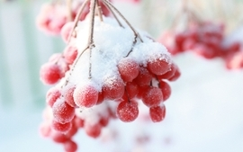 Snow fruits berries wallpaper