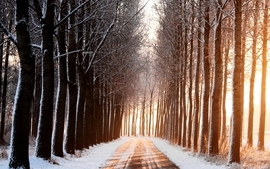 Snow sun roads avenue wallpaper